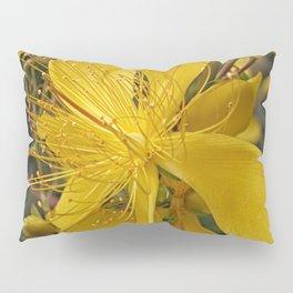 Hypericum flower closeup Pillow Sham
