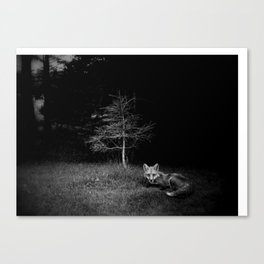Foxpeek Canvas Print