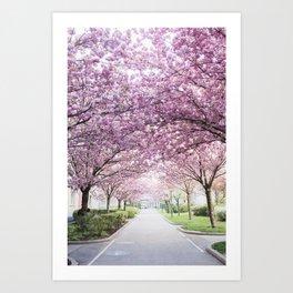 Sakura tree street Art Print