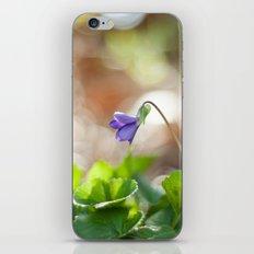 Wild Violet iPhone & iPod Skin