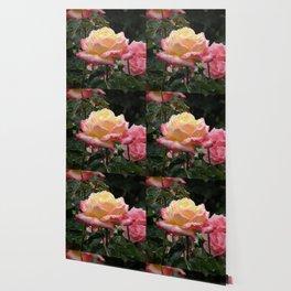 Rose in the Rain Wallpaper