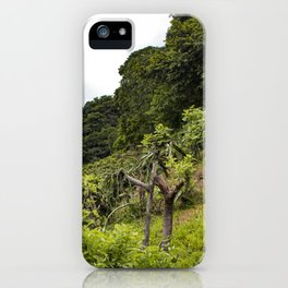 Dragon Fruit Fields Growing on the Side of a Hill in the Rainforest of Nicaragua iPhone Case
