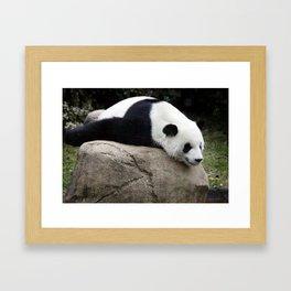 Giant Panda Framed Art Print
