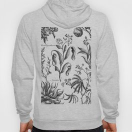 Antique Nepenthes and Drosera Print from 1757 Hoody