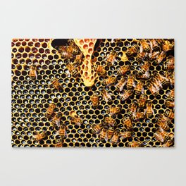 Sweet Honey Harvest Canvas Print