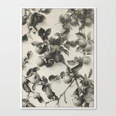 Vintage Apple Botanical Canvas Print