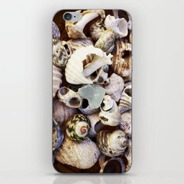 Shell Collection iPhone Skin