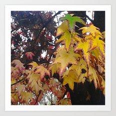 Fall Leaves California Art Print