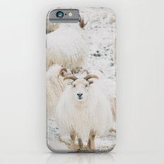 Icelandic Sheep iPhone 6s Slim Case