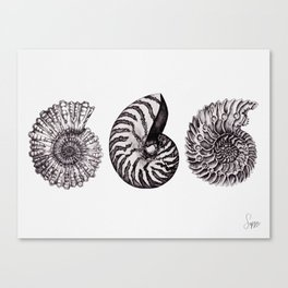 ammonite trio Canvas Print