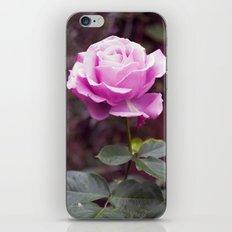 Hello Gorgeous Rose iPhone & iPod Skin
