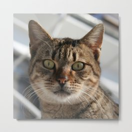 Beautiful Eyed Tabby Cat  Metal Print