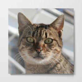 Beautiful Eyed Tabby Cat  Metal Print