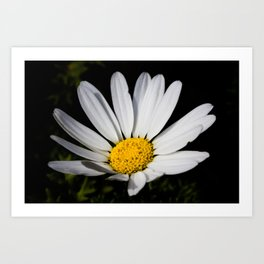 Midnight Daisy Art Print