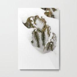 Snowy Spruce Needles 11 Metal Print