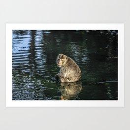 Monkey in the water Art Print