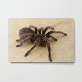 creepy crawlers Metal Print