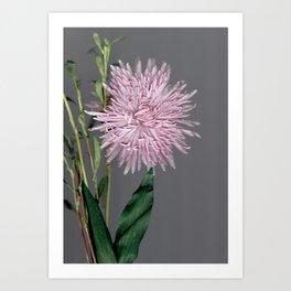 pale pink aster botanical Art Print