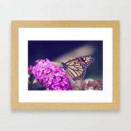 Butterfly Dreams Framed Art Print