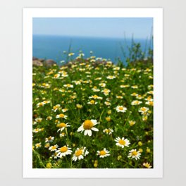The Camomile Field Art Print