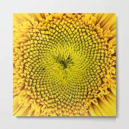 Teddy Bear Sunflower Center Metal Print