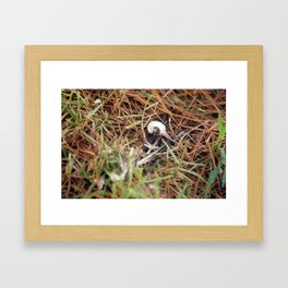 Bird Bones Framed Art Print