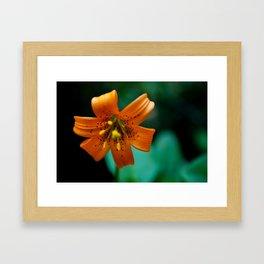Turk's Cap Lily Framed Art Print