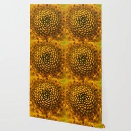 Macro Daisy Wallpaper
