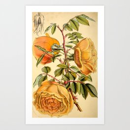 Fortunes Double Yellow rose Art Print