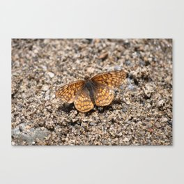 Small orange butterfly resting Canvas Print