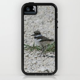 Baby Killdeer iPhone Case