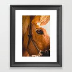the horse's eye. Framed Art Print