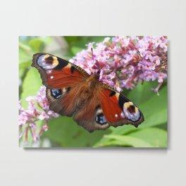 Peacock Butterfly Metal Print