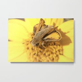 Summer Moth Metal Print