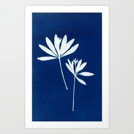 Cyanotype solar artprint Art Print