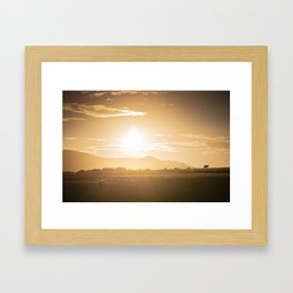 Sheep grazing in Lake District at sunset in England Framed Art Print