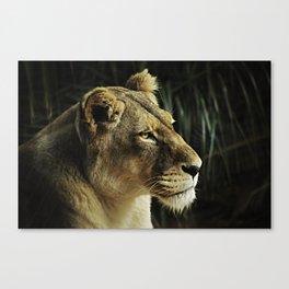 Lioness Canvas Print