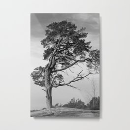 Lonely pine on a hill Metal Print