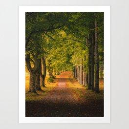 Autumn Morning Alley Art Print