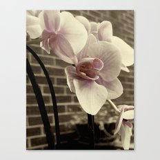 RUST;ORCHID Canvas Print