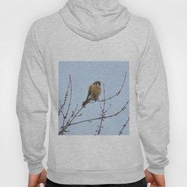 Sparrowhawk (Kestrel) 7 Hoody
