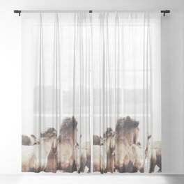 WILD AND FREE 2 - HORSES OF ICELAND Sheer Curtain