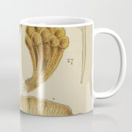 Naturalist Mushrooms Coffee Mug
