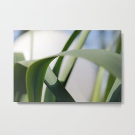 Green Arch Abstract Leaves Photography Metal Print