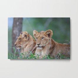 Lion brothers Metal Print