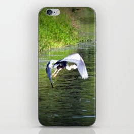 Great Blue Heron in flight, Trojan pond, near Goble, Oregon 3 iPhone Skin