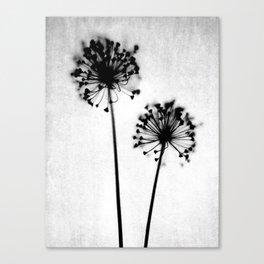 Dandelion Black and White Botanical Photo Canvas Print