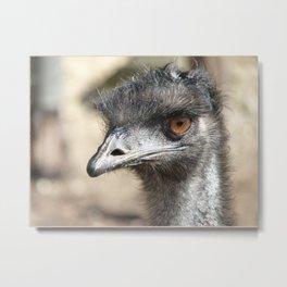 Inquisitive Emu Metal Print
