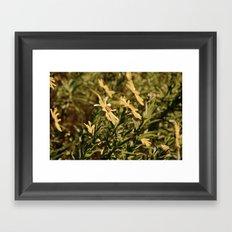 Sunward Framed Art Print
