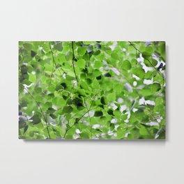 Birch Leaves 5051 Metal Print
